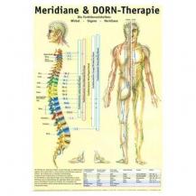 Lehrtafel: Meridian- und Wirbelsäule